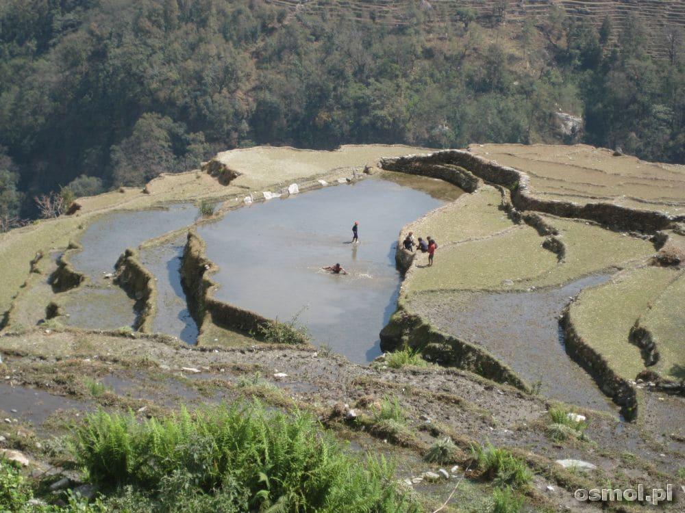 Tarasowe pola to stały widok w niższych partiach HImalajów. Wyżej będzie już bardziej surowo