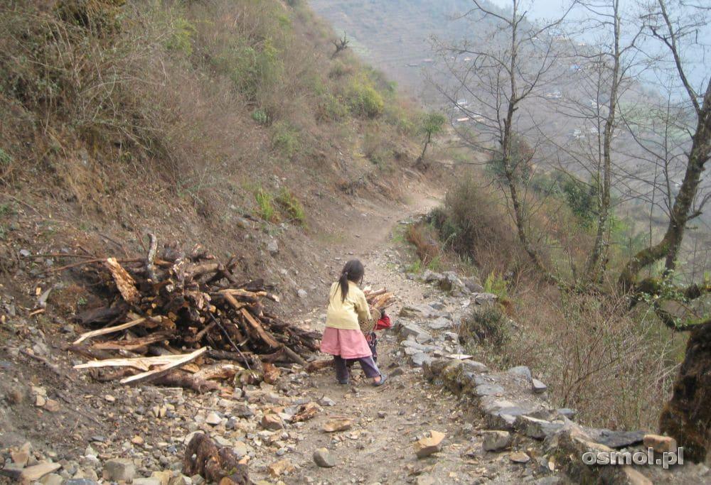 Himalaje - dzieci zbierają drewno na szlaku