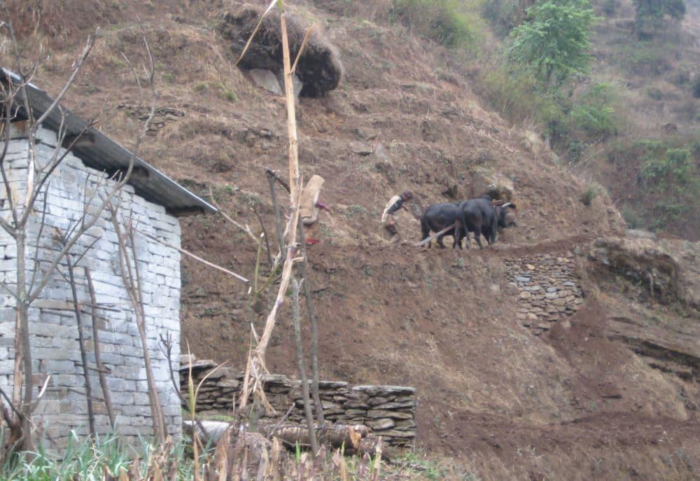 Himalaje rolnik orze tarasowe pole