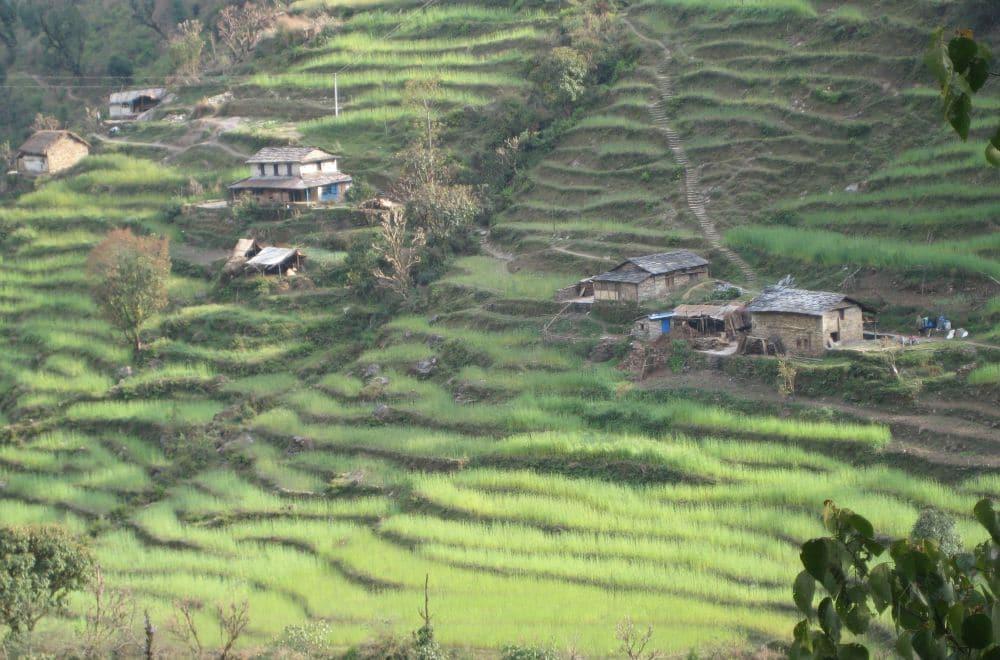 Tarasowe pola w Nepalu - Himalaje