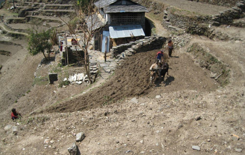 Rolnik orze pole w Nepalu