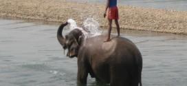 Chitwan. Kąpiel ze słoniami, bajeczne ptaki i nosorożce