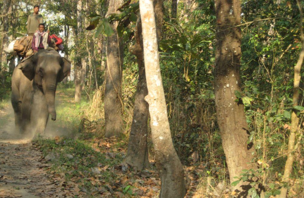 Słonie w parku narodowym Chitwan. Nepal