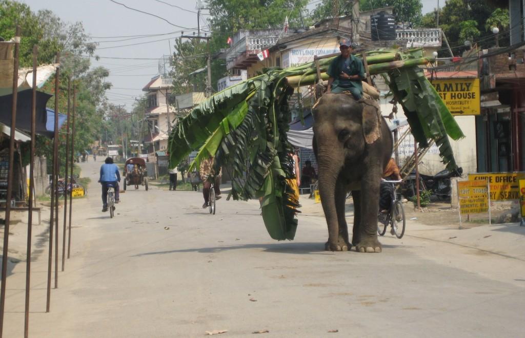 Słoń na ulicach Nepalu